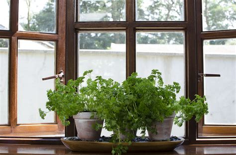 Superb Windowsill Garden #2 Diy Windowsill Herb Garden