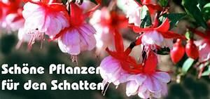 Pflanzen Für Den Schatten : schatten ~ Sanjose-hotels-ca.com Haus und Dekorationen