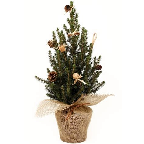 de noel en pot sapin de no 235 l naturel en pot pi10 h 40 50 cm vente sapin de no 235 l naturel en pot pi10 h