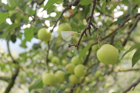 belajar foto  wisata petik apel malang berbagi kisahku