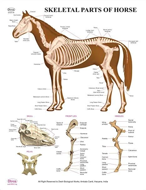 vertebrate invertebrate definition vertebrates invertebrates horses