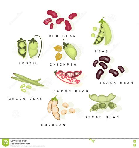 graphic soybean collection vector illustration cartoondealer com 78617974