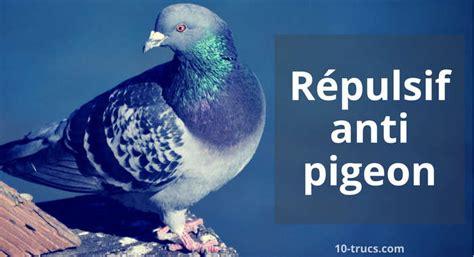 un bruit dans la cuisine répulsif pigeons 10 trucs pour les éloigner