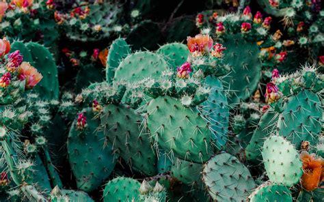 Download wallpaper 3840x2400 cacti, cactus, succulents ...