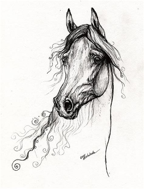 arabian horse portrait  drawing