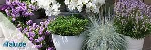 Pflege Von Lavendel : lavendel pflege in garten und topf ~ Lizthompson.info Haus und Dekorationen