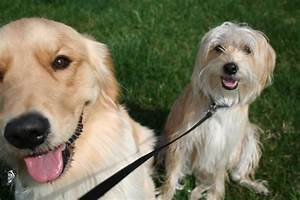 What is the benefit to using a pet sitting company with for Professional dog walker rates