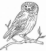Owl Coloring Marsh 49kb 999px Hawk sketch template