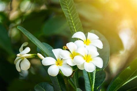 ดอกไม้สวยๆ: ดอกไม้สวยที่สุดในโลก