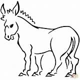 Donkey Coloring Pages Clip Colouring Printable Tailless Donkeys Clipart Drawing Template sketch template