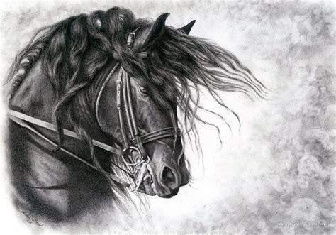 friesian drawing horse sketch art horses horse painting