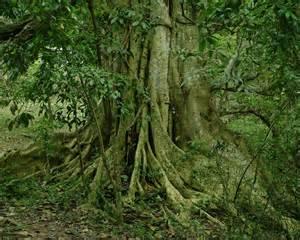 glorious trees