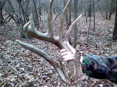 deer sheds for illinois shed antler big deer