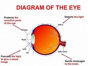 The Eye Pdf