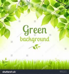 Natural Green Fresh Spring Leaves And Grass Botanic ...