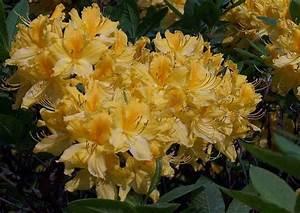 Was Blüht Im Schatten : welche blumen f r blumenkasten im schatten blumen in nanopics ~ Markanthonyermac.com Haus und Dekorationen