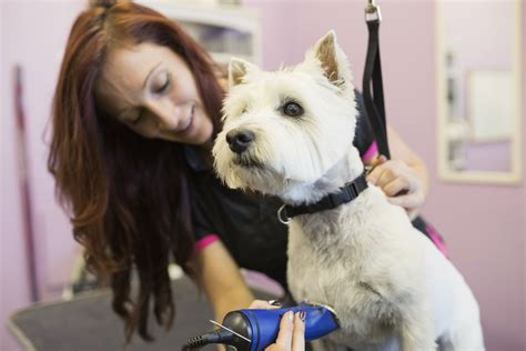start  dog grooming business