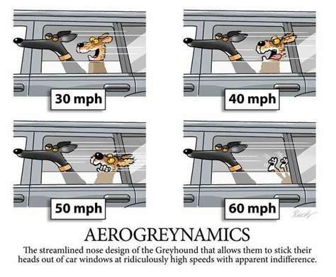 14 Best Greyhound Cartoons Images On Pinterest