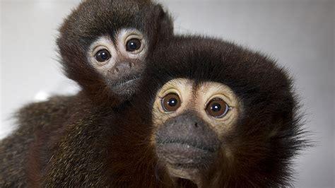 facts california national primate research center uc davis