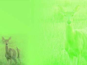 deer  powerpoint templates