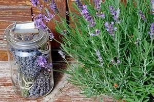 Lavendel Wann Schneiden : lavendel richtig schneiden garten fr ulein zeigt dir wie ~ Lizthompson.info Haus und Dekorationen