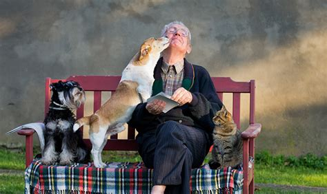 exploring   pets  older adults  act magazine
