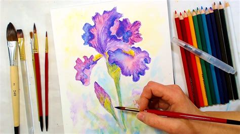 iris watercolor pencil drawing  painting tutorial