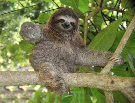 Sloth Images Sloth Wallpapers Wallpaper Cave