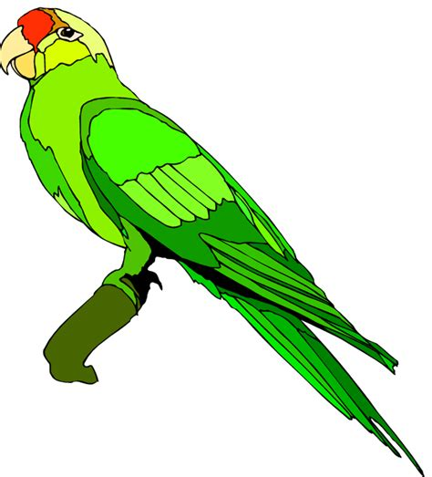 Parrot Clip Free Parrot And Macaw Clipart