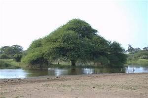 Function Of Wetlands