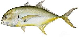 Fishing Boat Rentals Clearwater Fl by Clearwater Boat Rentals For Fishing Clearwater Fl