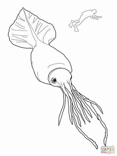 Squid Coloring Colossal Scuba Vampire Printable Colorare