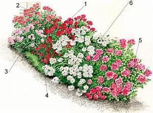 Rosenbeet Mit Stauden : rosenbeet im sommer mit frostharten rosensorten ~ Frokenaadalensverden.com Haus und Dekorationen