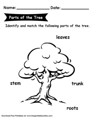 parts   tree kids worksheet worksheets  kids