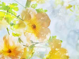 Summer flowers wallpaper - beautiful desktop wallpapers 2014