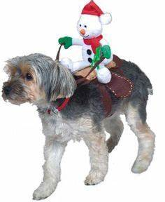 Best 25 Dog christmas outfits ideas on Pinterest