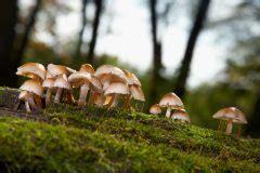 Pilze Im Garten Vermehren by Vermehrung Pilzen 187 Wie Verbreiten Sie Sich