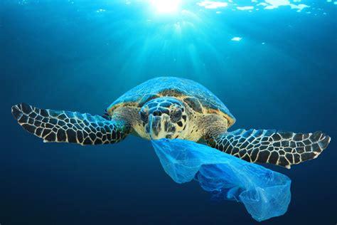 stemming  tide  plastic pollution ideas matter