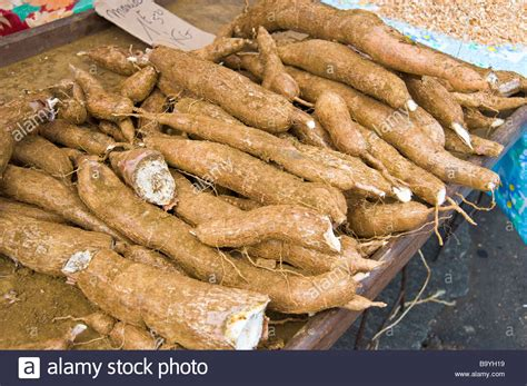 cuisine manioc manioc roots manihot esculenta food market la réunion