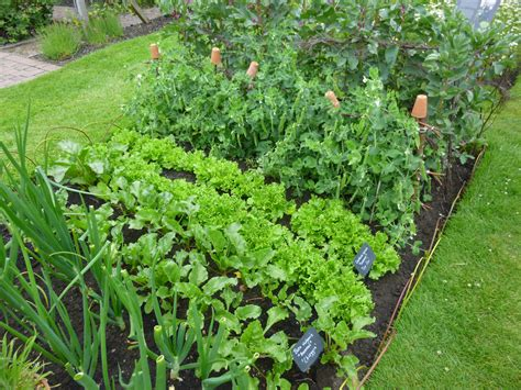 What To Do In The Your Fruit And Vegetable Garden In