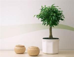 Plantes à Suspendre : plantes et fleurs pour une maison feng shui femme actuelle ~ Premium-room.com Idées de Décoration