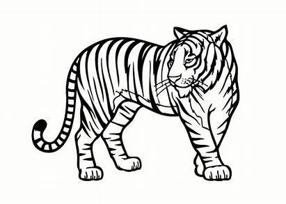Endangered Drawing Species Extinct Coloring Pages Lemur