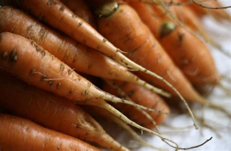 que cuisiner avec des carottes que faire avec des carottes 4 recettes originales