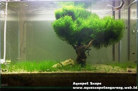 flame moss google search aquascaping planted