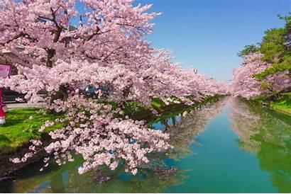 Blossom Cherry Japan Asia Sakura Park Destinations
