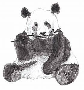 How to Draw a Panda - Yedraw - Drawing Lessons for Kids
