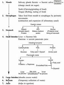 Life Processes Class 10 Notes Science