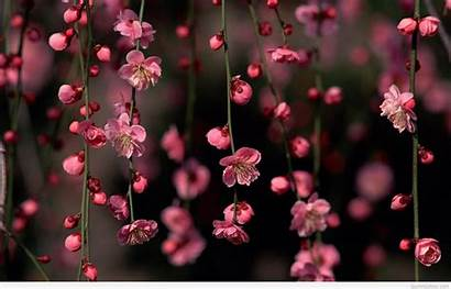 Spring Wallpapers Flowers Quotes Backgrounds Cherry Blossom