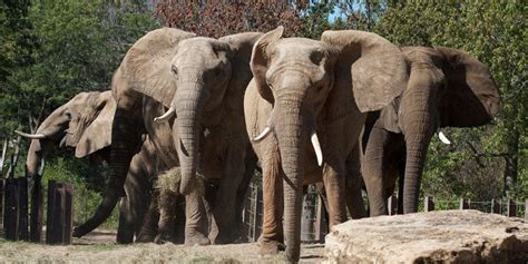kansas city zoo visit kc