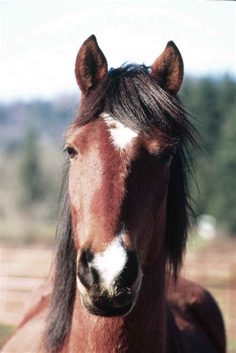 domestic horse animals wildlife wild